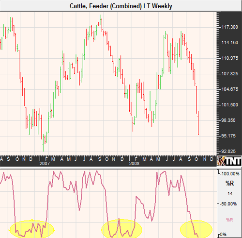 Feeder Cattle Futures and Options October 2008