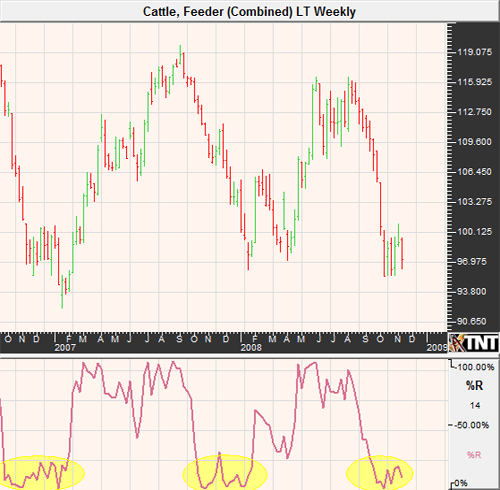 Feeder Cattle Futures Market November 2008